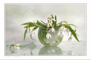 http://data9.gallery.ru/albums/gallery/108059--20435345-h200.jpg