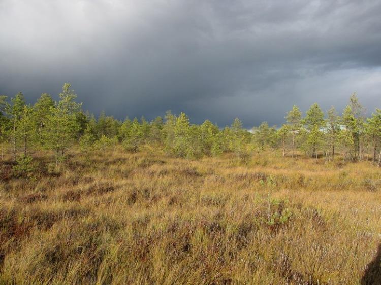 Картинки даров природы в ноябрьских лесах янао